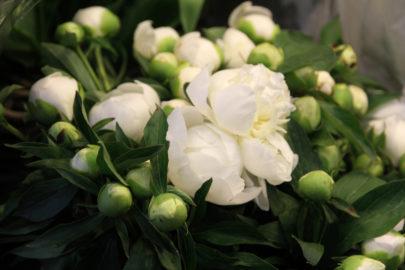 Les Fleurs du week end