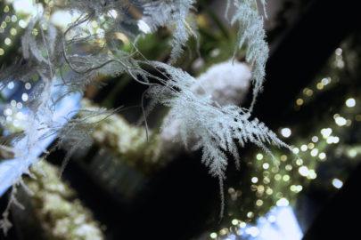 Les plus belles compositions florales de Noël