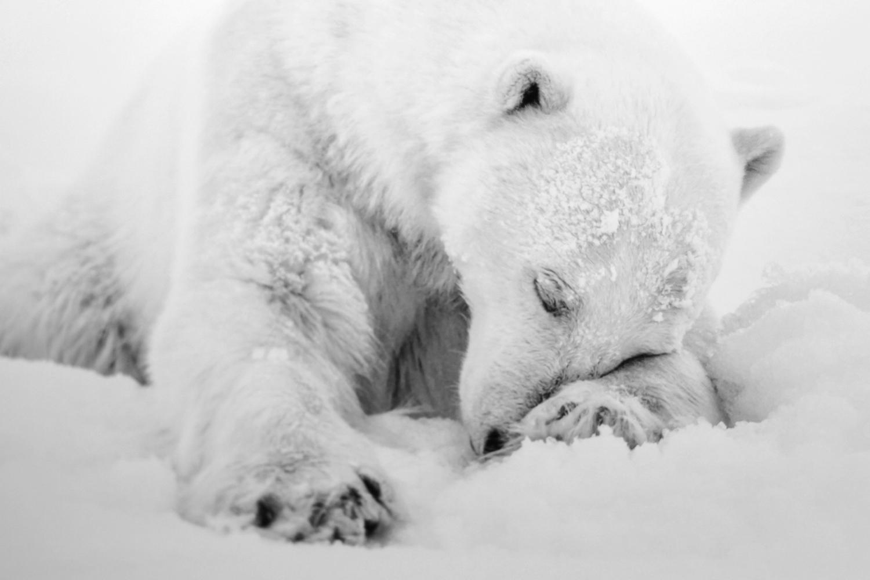 photographies-bear-nolwenn-hadet