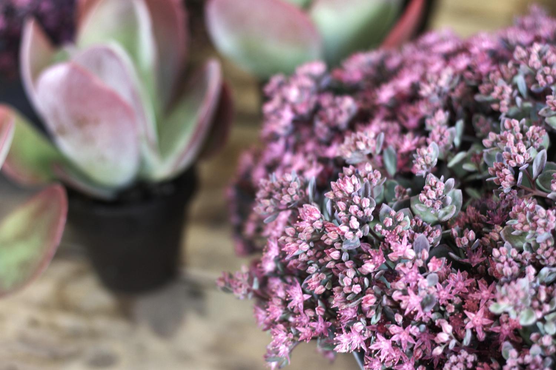 histoire-de-fleurs (2)