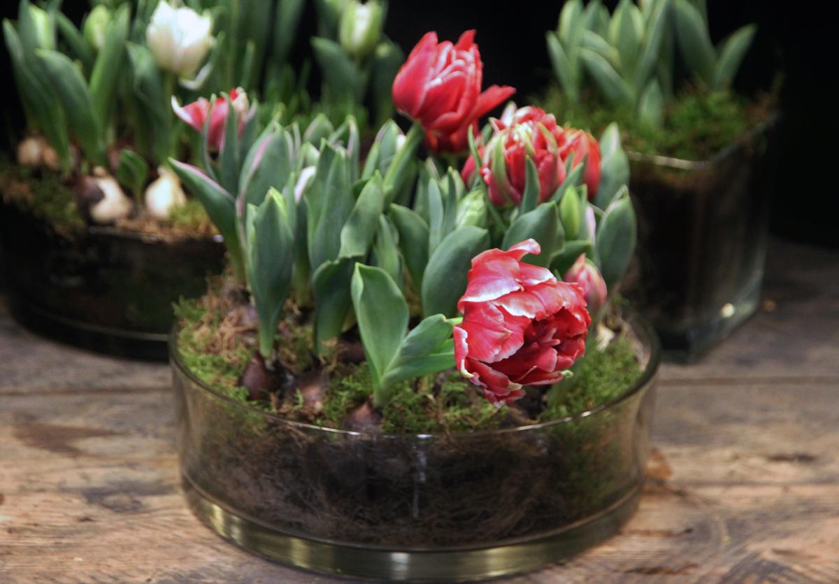 Les Fleurs du Week end de Pâques