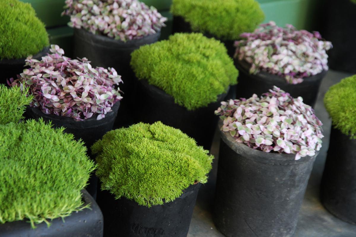 Déco Outdoor chez Histoire de Fleurs